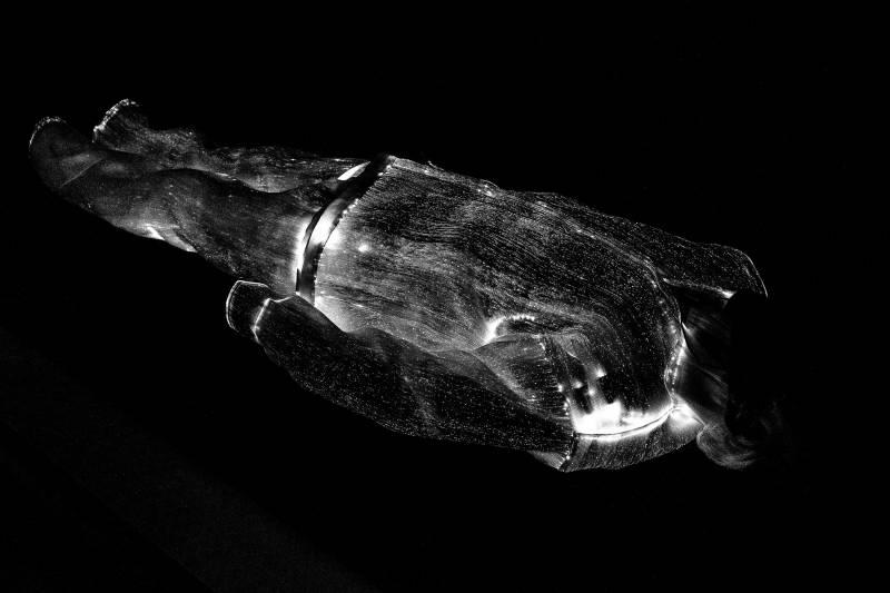 Lampyris Nocticula (2014)